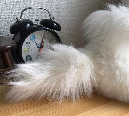 2019.10.15しっぽブログ用.jpg